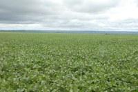 Governo alerta produtores sobre ocorrência de uma nova praga na cultura da soja no Tocantins
