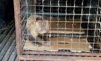 Naturatins alerta população para não domesticar animais silvestres